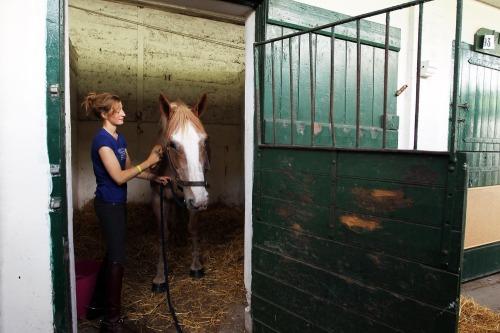 Dublin_horse_show_preperations_max11