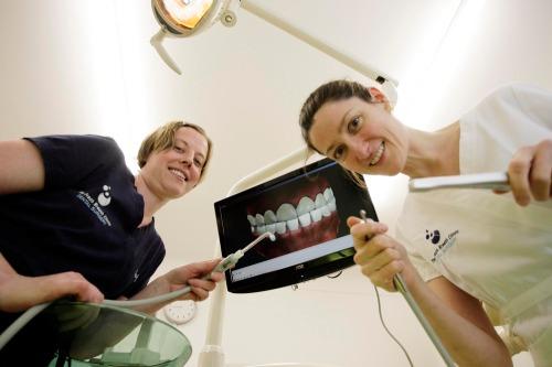 Charlie_weston_story_-_dentist_max7