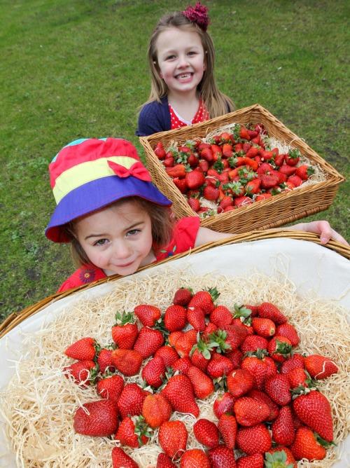 Supervalu_1st_irish_strawberries_mx-7