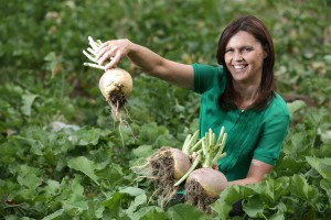 Tesco Turnip Sales